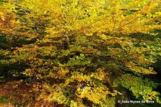 Fall @ Peneda-Gerês National Park > Portugal