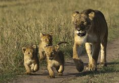 Bringing the Cubs to Dinner by Mike Johnson