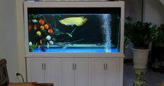 Bể cá rồng gỗ xoan sơn trắng phù hợp nội thất hiện đại