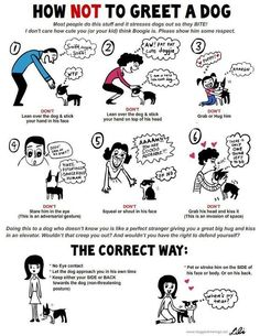 How NOT to greet a dog!