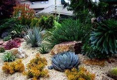 succulents + rocks