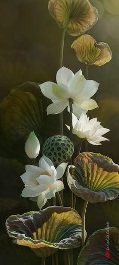 """who doesn't love water lilies, but their pods are another favorite~ Even today in China (Guangzhou), there are families with """"lotus foot ancestry"""". Exotic Flowers, Amazing Flowers, Beautiful Flowers, Art Floral, Ikebana, Botanical Art, Asian Art, Flower Art, Lotus Flower"""