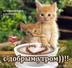 Photo Wall, Cats, Animals, Urdu Quotes, English, Iphone, Good Night, Pretty Quotes, Bonjour