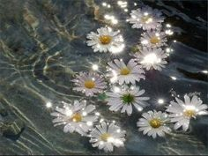 flowers, water, and daisy image Flower Aesthetic, Aesthetic Images, Purple Aesthetic, Aesthetic Collage, Aesthetic Backgrounds, Aesthetic Iphone Wallpaper, Aesthetic Photo, Aesthetic Wallpapers, Water Aesthetic