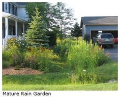 Homeowners can reduce water runoff from their yards by using a functional and aesthetic design practice called a rain garden. A rain garden is a small area in a residential yard or neighborhood planted with flowers and ornamental grasses designed to temporarily hold and soak in rain water that comes from a house roof, driveway or other open area. A rain garden is not a pond or wetland. It is dry most of the time and holds water after a rain. (this would be good for overflow of rain barrel)