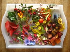 Bits of Fall color collected on a walk.