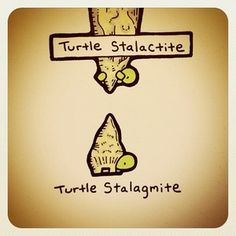 Turtle Stalactite and Turtle Stalagmite Print from Turtle Wayne. His turtle drawings are amazing.