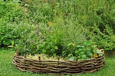 Kitchen garden in a basket