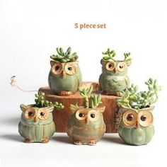 5 owl planter set