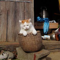 かごのしろ - かご猫 Blog