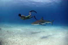 SharkWater, greatest film documentary about shark