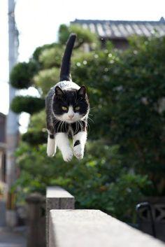 Gatos de Fukuoka