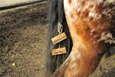 Equine Assisted Learning Program    Love this idea~ Can't wait to try it.