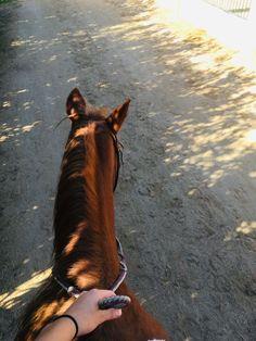 A beautiful travel view ❤️ Cute Horses, Pretty Horses, Horse Love, Beautiful Creatures, Animals Beautiful, Cute Animals, Horse Photos, Horse Pictures, Cavalo Wallpaper