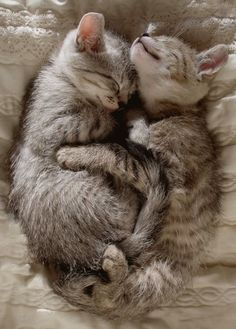 This reminds me of Simone and Simon when we first got them. They were so cute!!!