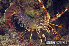 Immersioni all'Isola d'Elba. Scuba diving.