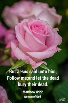"But Jesus said to him, ""Follow Me, and let the dead bury their own dead."" [Matthew 8:22] To be a good disciple requires priority for discipleship. This is a hard requirement which few are willing to pay."