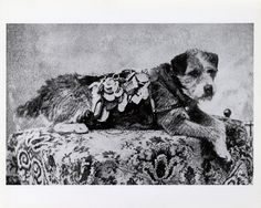 Owney      A stray dog who wandered into the Albany, New York, post office in 1888. The clerks let him stay the night, and he fell asleep on a pile of empty mailbags. Owney was attracted to the texture or scent of the mailbags and began to follow them, first onto mail wagons and then onto mail trains.  The RPO clerks adopted Owney as their unofficial mascot, marking his travels by placing medals and tags from his stops on his collar.