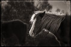 Equus Collection by Arden Ward Upton. www.ardenwardupto... 205-427-1144 for more info. #ardenwardupton #ardenphotography #equuscollection