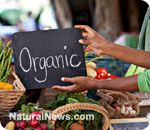article:Don't believe the lie! Organic Farming CAN feed the world!.... I wrote a research paper on GMOs. I am majorly against it after doing so much research.