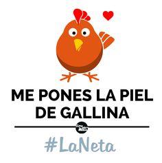 ¿Se te pone la piel de gallina? #LaNeta #FraseDelDía
