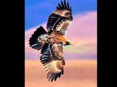 Határtalan dal az összefogásért Owl, Bird, Owls, Birds