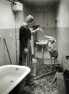 As Soviet troops approached Berlin in 1945, citizens did their best to take care of Berlin Zoo's animals : interestingasfuck || Shoebill