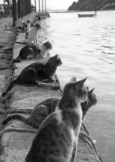Cats Waiting for Fishermen to Return - Gatos esperando la llegada de los… Funny Cats, Funny Animals, Cute Animals, Smart Animals, Cats Humor, Cat Memes, Baby Animals, Beautiful Cats, Animals Beautiful