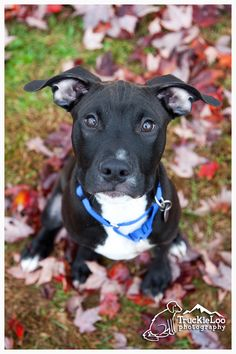 Could I be anymore adorable? I am the sweetest boy you will ever meet.  I am very smart and playful. I just need a family to call my own. I am still just a baby at 5 months old.   I think I  am going to be a pretty big boy when I am all finished...