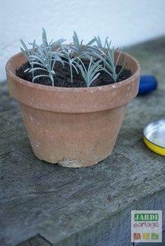 Indoor succulent planter diy herbs Ideas for 2019 Growing Lavender, Planting Flowers, Garden Online, Plants, Hydrangea Care, Succulent Planter Diy, Diy Planters, Succulents Indoor, Garden Landscaping