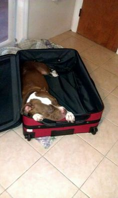 He is making sure you don't go without him!