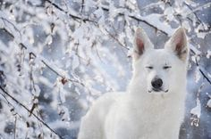 woman creates enchanting portraits of dogs in the austrian wilderness 24