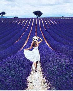Dream about Lavender fields 💜 Tag someone you want to go here with. Spring Photography, Creative Photography, Photography Poses, Lavender Fields, Lavender Flowers, Lavander, Purple Roses, How Beautiful, Beautiful Flowers