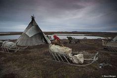 Nenet reindeer herders, Yamal Peninsula. | The Nenets of Siberia