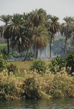 The Banks of the River Nile