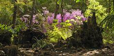 Les azalées du jardin japonais