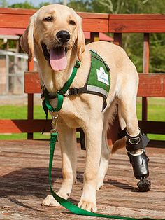 Groupon Deal Helps Puppy with Prosthetic Leg : People.com