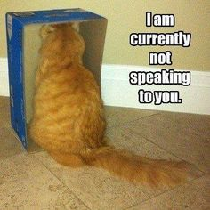 Passive aggressive cat is not speaking to you.