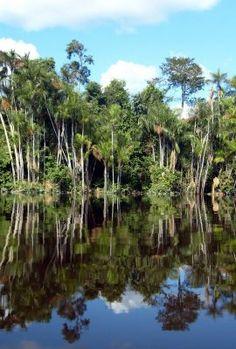 O rio Negro é o maior afluente do rio Amazônas, é o mais extenso rio de água negra do mundo e o segundo maior em volume de água