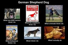 What my friends think I do what I actually do – German Shephard Dog