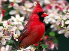 Resultado de imagen para imágenes de pájaros hermosos