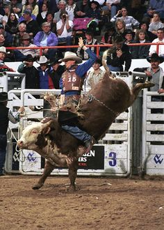 I love to go to Bull Riding events!  When I can't go to them... I like to watch them on TV!