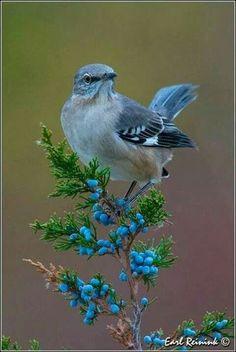 Awwwwwwwww I love these birds!!