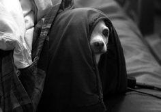 Elliott Erwitt Dogs | Photos #1, 2, 3, 5 by Elliott Erwitt, #4 by BILJANA, #6 by ROBERT