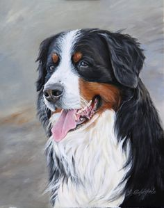 Animal portraits by ~Charbonnee Chien Mira, Dog Illustration, Illustrations, Burmese Mountain Dogs, Crazy Dog Lady, Different Dogs, Animal Portraits, Happy Art, Dog Paintings