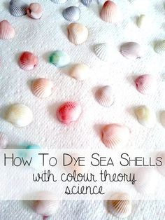 How to Dye Seashells with color theory science