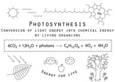 The Floss Box | Photosynthesis Embroidery