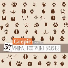 Animal footprints: Photoshop brushes with animal footprints - set of 57 different animal footsteps including dogs, cats, bears, birds