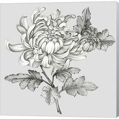 size: Art Print: Grey Botanical II by Eva Watts : Chrysanthemum Drawing, Chrysanthemum Flower, Crysanthemum Tattoo, Canvas Artwork, Canvas Prints, Framed Artwork, Framed Prints, Painting Prints, Art Prints
