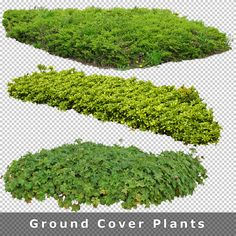 Photoshop Rendering, Photoshop Design, Landscape And Urbanism, Landscape Design, Tree Render, Tree Psd, Tree Photoshop, Plant Texture, Cool Pictures Of Nature